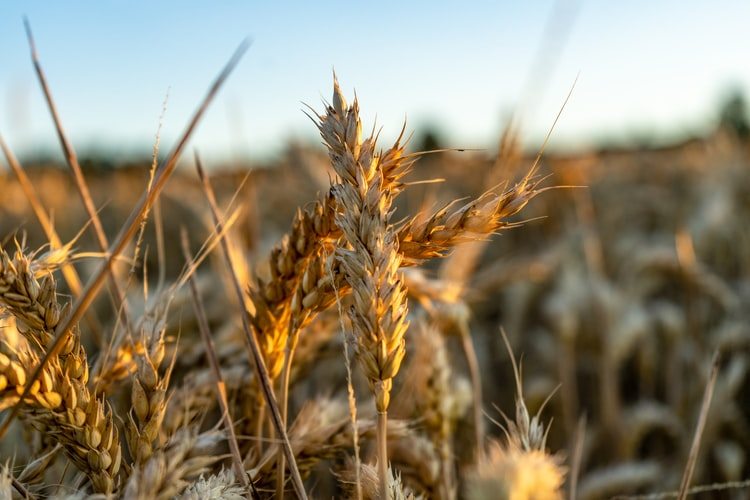 High Fibre Cereals To Lose Weight